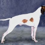 """Breeds of dogs """"The Braco St. Germain"""""""
