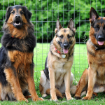 Psychological characteristics of the dog