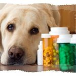 Role of nutrients, vitamins & power house for dog