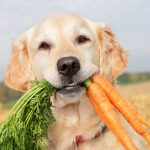 Organic and natural food for dogs