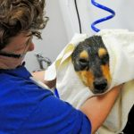 Drying the dog after her bath