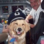 Flying with dog: in the cabin or hold