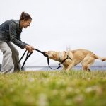 Playing with dog: advice from the dog trainer