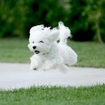 The runaway dog: causes and solutions
