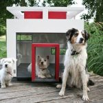 How to choose a house dog?