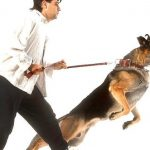 Why dog ​​is aggressive