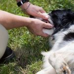 Health examinations before traveling with dog