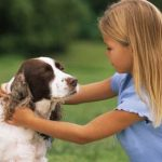 The most important lessons of Training Dogs