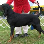 "Breeds of dogs ""the black Austrian hound and fire"""