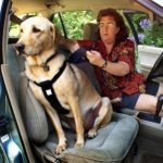 Tips for traveling with dog