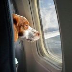 The dog and the flight