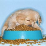 The puppy food