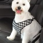 Dog Safety Belt Approved Deluxe