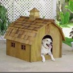 Why dogs like to have a Doghouse?