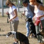 Selecting a dog obedience school