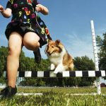 Tips for choosing his dog race