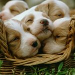 How to choose a puppy in good health?