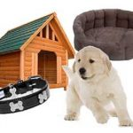 Dog accessories: must have