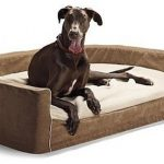 Dog bed: a comfortable layer