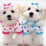 Dog clothing: from the frivolous to the useful