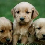 The imprinting at the puppy