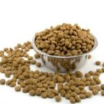Kibble for dog: how to choose the best?