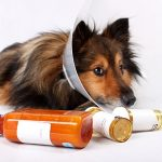 Treat arthritis of the dog by herbal medicine
