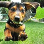 When to use herbal medicine for dog?