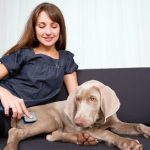 Osteopathy to treat his dog