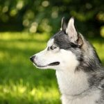 Treat his dog on a daily basis with homeopathy