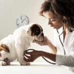 Vaccine for dog
