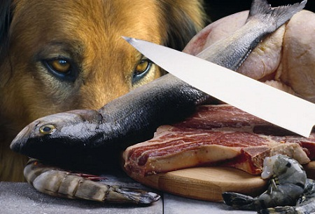 Give raw dog meat