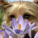 Aromatherapy for dogs: care with essential oils