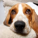 What to put on the floor in a dog run