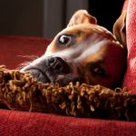 How to remove dog urine smell outdoors