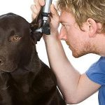 A home remedy to prevent dogs
