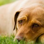 Remedies for itchy skin in dogs