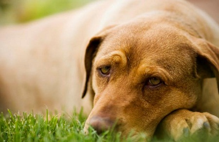 What Can I Use On My Dog To Relieve Itching