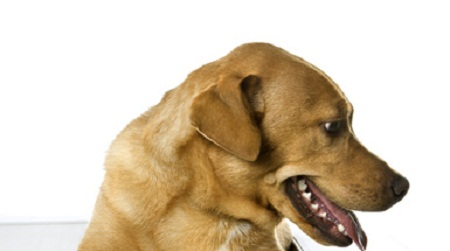 urinary problems in dogs