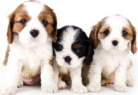 Can You Give Dogs Fish Oil Capsules For Dry Skin