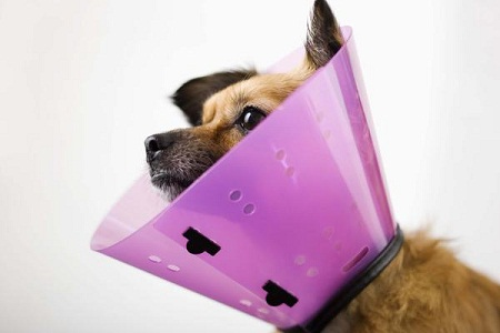 How to Make a cone collar for dog - The Dogs Bone