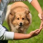 Schools for dog training