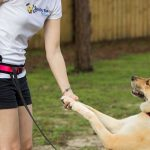How to teach your dog to obey and do tricks