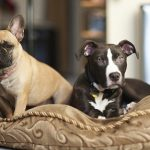 What to put on the floor in an area for dogs