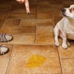 How to get your dog to stop urinating in the house