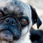 What causes dry eyes of a dog?