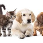5 Nutritional Nuggets for Maximising Your Pet's Diet
