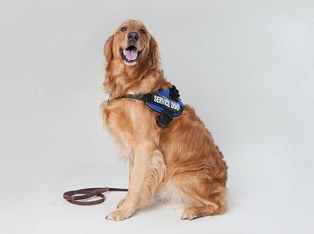 The best way to train dogs to assist those that have disabilities