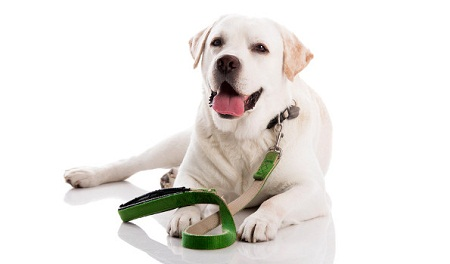 Choosing the right collar and leash