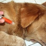 How to prevent dogs from chewing everything they find out